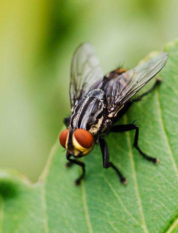 Остерегайтесь мух